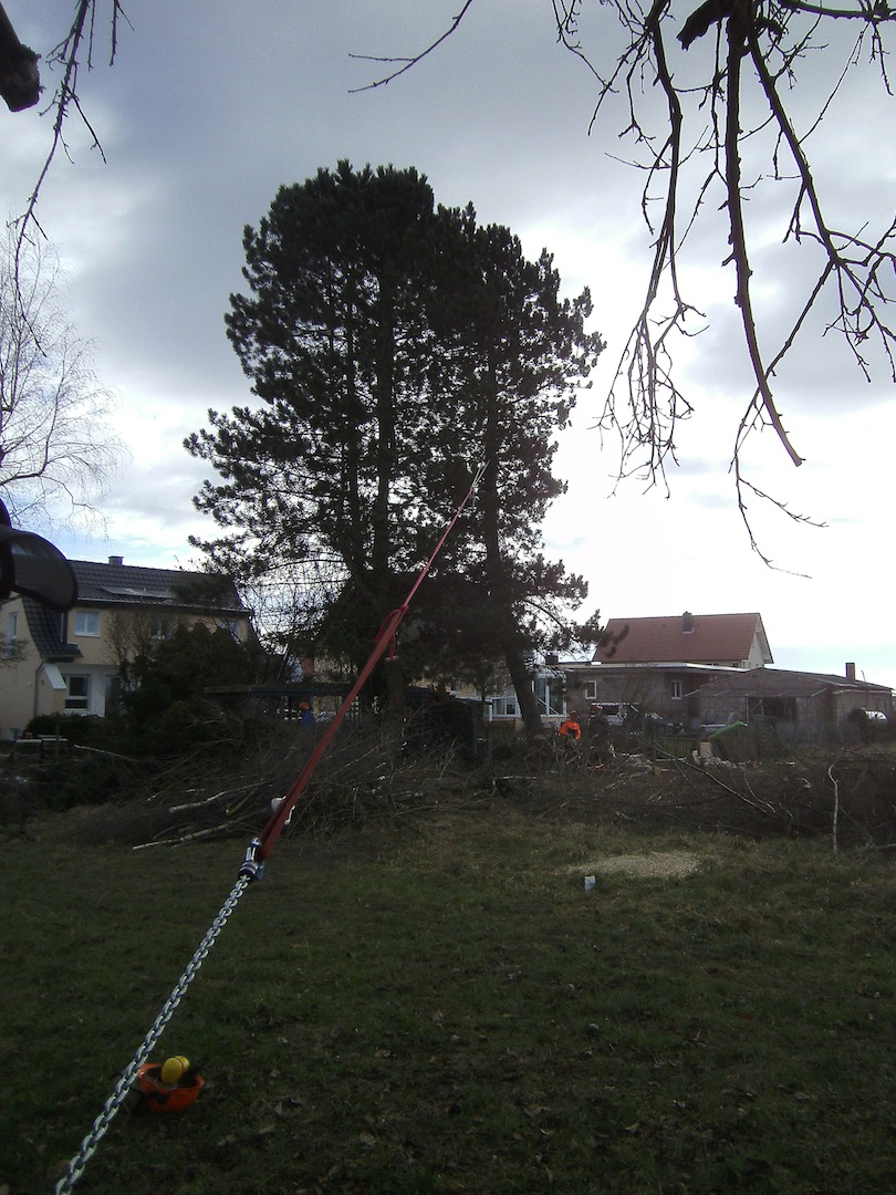 Baumfällen02022013A